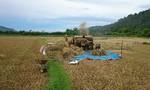 Cướp lúa của nông dân giữa ban ngày
