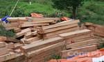 Phát hiện 2,4m3 gỗ Pơ mu giấu trong bụi rậm