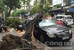 Cây xanh tróc gốc đè một ô tô đang đậu, chắn ngang đường