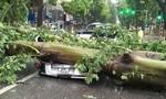 Hà Nội ngổn ngang sau ảnh hưởng của cơn bão số 1