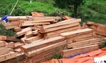 Quảng Nam: Ủy ban kiểm tra tỉnh ủy vào cuộc vụ phá rừng pơ mu