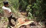 Cách chức, chuyển công tác 2 cán bộ lãnh đạo kiểm lâm để xảy ra khai thác rừng trái phép