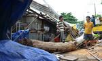 Cây xanh ngã giữa chợ ở Sài Gòn, một phụ nữ bị quật ngã