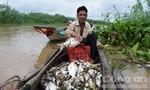 Cá chết bất thường nổi trắng trên thượng nguồn sông Sài Gòn
