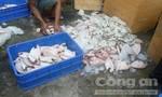 Gần một tấn cá hôi thối tại quán cơm Gia Long