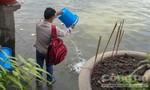 Thả cá phóng sinh mùa Vu Lan : Chưa kịp vui đã rước ấm ức