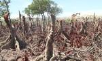 Hà Tĩnh: Xây dự án, sở nông nghiệp xâm phạm rừng phòng hộ khiến dân bức xúc
