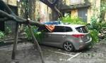 Bão số 3 chưa tới, cây đã bật gốc đè nát ô tô ở Hà Nội