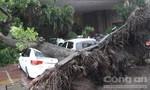 Vietnam Airlines huỷ 22 chuyến bay do bão Thần Sấm