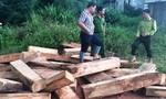 Một số đối tượng bị bắt liên quan đến vụ phá rừng pơ mu ở Quảng Nam