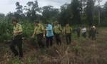 Đàn voi rừng kéo về tàn phá hoa màu của người dân