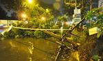 Cây xanh 7 lần bật gốc trong mưa ở Sài Gòn