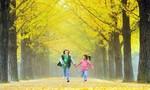 Ngoạn cảnh mùa thu xứ Hàn