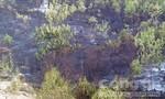 Gần 30 ha Keo bị cháy rụi