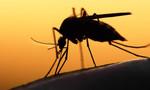 TP.HCM: Tăng cường kiểm soát vi rút Zika khi một người Đức bị nhiễm
