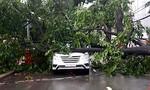 Cận cảnh cây ngã đè hàng loạt ô tô trên đường phố Sài Gòn
