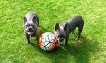 MU gửi chuyên gia đến huấn luyện riêng cho… chó của tài năng trẻ