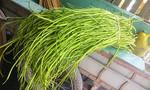 Phát hiện 3 cơ sở ngâm rau muống vào hóa chất ở Sài Gòn
