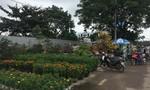 Nhộn nhịp chợ hoa Quy Nhơn ngày cận Tết