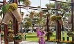 Quảng trường 24-3, TP Tam kỳ rực rỡ sắc hoa