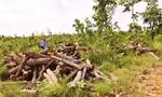 Bắt giam nguyên Giám đốc doanh nghiệp phá 49ha rừng