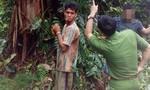 Truy tìm nhóm thanh niên cưa trộm cây thủy tùng quý hiếm