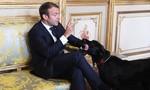 Tổng thống Pháp 'mất mặt' vì chó cưng…tè bậy giữa cuộc họp