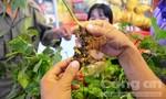 Phiên chợ sâm Ngọc Linh lần thứ nhất thu về trên 4,5 tỷ đồng