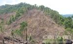 Yêu cầu điều tra, xử lý nghiêm vụ phá rừng ở Quảng Nam