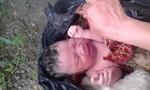 Phát hiện bé gái sơ sinh bị bỏ rơi trong đêm giá lạnh