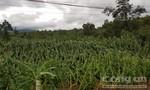 Đắk Lắk: Gần 8.000ha cây trồng bị gãy, đổ do bão số 12