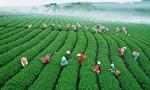 Tôn vinh ngành trà và tơ lụa Bảo Lộc – Lâm Đồng
