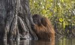 Loạt ảnh thiên nhiên đoạt giải của National Geographic năm 2017