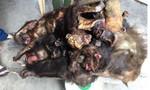 Người phụ nữ bị bắt khi đưa 7 con khỉ chết đi tiêu thụ