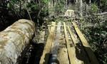 Tiếp cận 'đại công trường' khai thác gỗ của lâm tặc