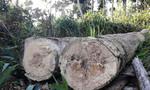 Sau phản ánh của Báo CATP: Truy quét 'đại công trường' khai thác gỗ lậu