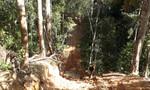 Vụ 'đại công trường khai thác gỗ lậu': Tỉnh Gia Lai yêu cầu khẩn trương truy quét và xử lý