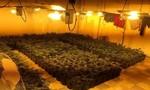 Bắt nhóm người gốc Việt trồng cần sa trong nhà ở Hong Kong