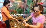 Chưa phát hiện sâm Ngọc Linh giả tại các phiên chợ
