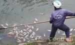 Cá chết hàng loạt ở tuyến kênh Hòa Minh