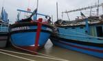 Hàng trăm tàu đánh bắt cá ngừ đầu xuân bị kẹt