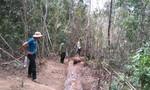 Bất chấp kiểm lâm nổ súng, lâm tặc vẫn liều lĩnh cướp lại gỗ