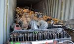 3 container hàng cấm nhập khẩu bị chủ 'bỏ rơi' ở cảng Cát Lái