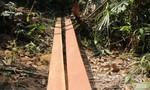 Chỉ đạo kiểm tra khu vực xảy ra phá rừng phòng hộ