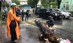 Cây xanh ngã đè xe máy, người phụ nữ thoát chết gang tấc