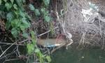 Phát hiện bộ xương người nằm sát bờ sông