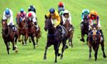 Lâm Đồng mở Trường đua ngựa đạt chuẩn quốc tế