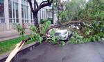 TP.HCM: Nhánh cây gãy đè 'siêu xe' trong cơn mưa đầu mùa khô