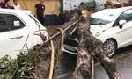 Hà Nội: Mưa đầu mùa như trút nước, cây xanh bật gốc đè ô tô
