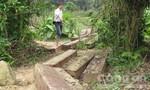 Kỷ luật cán bộ, làm rõ các đối tượng phá rừng đầu nguồn